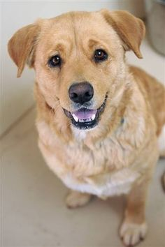 Adoptable Dog: Carmel #pets #animals #adoption #rescue #dog
