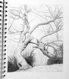 I've disvovered that drawing branches is quite relaxing. The wonkier the better :) This one is based on a photo of Snow gums taken by Ian Brown. Landscape Illustration, Illustration Art, Tree Drawings Pencil, Family Tree For Kids, Palm Trees Landscaping, Spooky Trees, Tree Sketches, Celtic Tree Of Life, Line Art