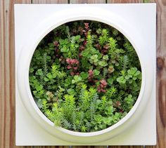 Living Wall Planter Comes Preplanted by Twisted Metals - contemporary - indoor pots and planters - Etsy