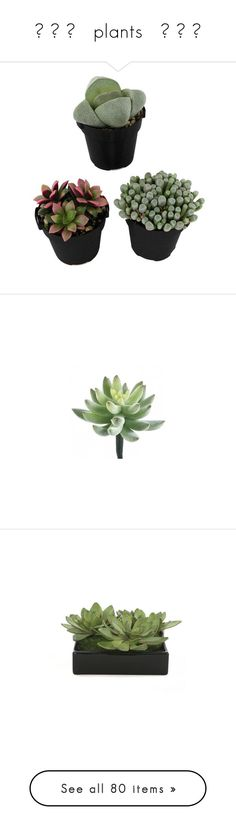 """""""♡ ♡ ♡   plants   ♡ ♡ ♡"""" by mash-step ❤ liked on Polyvore featuring GREEN, Flowers, nature, fillers, plants, fillers - plants, flowers, home, home decor and floral decor"""