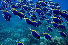 Beim Schnorcheln in Thailand bekommt ihr die Möglichkeit eine bunte Unterwasserwelt zu sehen.  #Schnorcheln #Thailand #Fisch #erlebeFernreisen