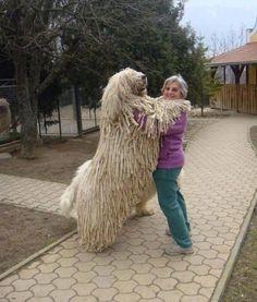 Large dog!