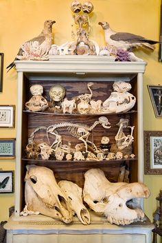 Cabinet of curiosities Weird news and oddities on Cult of Weird