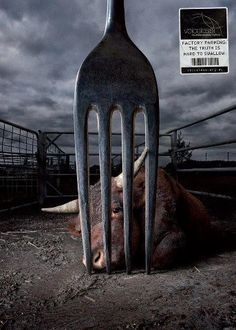 Today's species holocaust goes via your fork