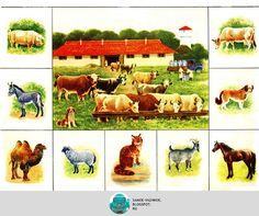 Lotto az állatvilágban a szerző a játék A. Kreschanovskaya művész Vadim Trofimov játék állat festő, a Szovjetunió 1989-ben négy nyelven, négy régi szovjet gyermekkori beolvassa print letöltés nyomtatási Haszonállatok