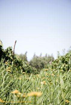 CECHIN ORGANIC WINE-MENDOZA - ARGENTINA  PHOTO BY GASTÓN LARROSA   http://www.flickr.com/photos/gaslarrosa/