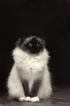Too Cute!!!#cat