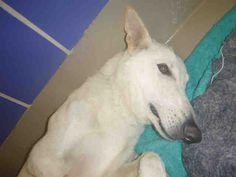 www.PetHarbor.com pet:ASTN.A712354