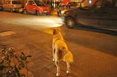 RAMÓN GRAU. Director of Photography: Noche de perros . Palermo . Italia diciembre de este año .