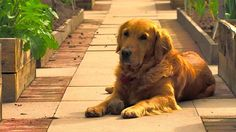 THE GRØNMARK BLOG: The real star of Gardeners' World is a golden retriever called Nigel