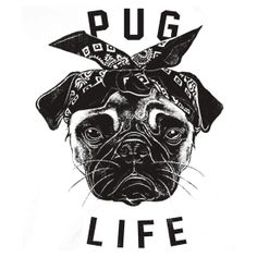 the hundreds pug - Google Search
