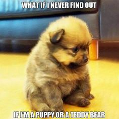 Either way your adorable!!