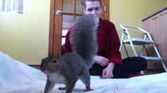 Squirrel Playing