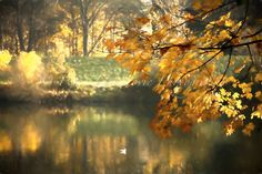 Pond... painterly photography Photography For Sale, Fine Art Photography, Pond, Colours, Autumn, Prints, Painting, Water Pond, Art Photography