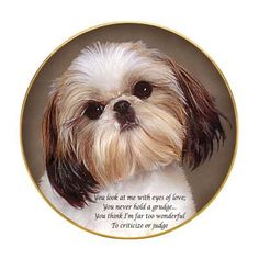 Shih Tzus have the sweetest personalities.