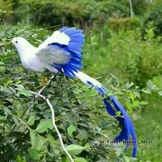 beautiful simulation flying Phoenix Bird toy white and blue long-tailed bird gift about Pretty Birds, Beautiful Birds, Animals Beautiful, Rare Birds, Exotic Birds, Tropical Birds, Colorful Birds, Super Cute Animals, Mundo Animal