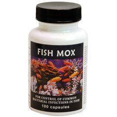 thomas labs fish mox amoxicillin 100 count 500mg capsules