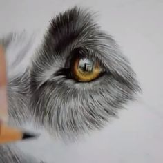 Realistic Animal Drawings, Pencil Drawings Of Animals, Animal Sketches, Art Drawings Sketches, Colorful Drawings, Colorful Animal Paintings, Dog Drawings, Dog Drawing Tutorial, Color Pencil Art