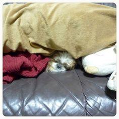 Sweet dream.