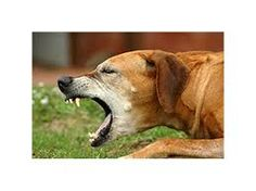 Dog Coughing: 10 Keys to Know How Dangerous It Is