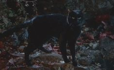 Binx is a boy who is changed into a black cat by three cruel witches in the Disney film Hocus Pocus (1993).