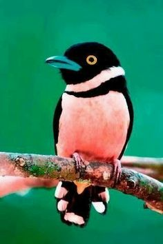 Beautiful bird, beautiful colors.