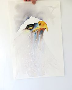 A watercolor of the Bald Eagle