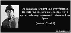 Les chiens vous regardent tous avec vénération. Les chats vous toisent tous avec dédain. Il n'y a que les cochons qui vous considèrent comme leurs égaux. - Winston Churchill