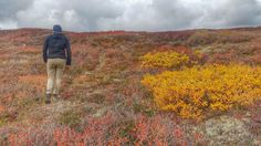 Most Unusual Places to View Fall Colors - Alaska in August - HIking on the High Tundra bove the Arctic Circle. The red is the fireweed