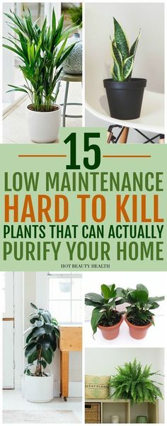 The best air purifying plants that are super low maintenance and hard to kill. ( gerbera daises, snake plants, peace lily, boston ferns, and more) Many need only low light and are also pet safe. Inside Plants, Cool Plants, Small Plants, Green Plants, Good Plants For Indoors, Inside Garden, Growing Plants Indoors, Live Plants, Diy Garden