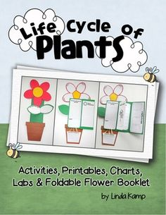 plants: spring: life science: science labs: plant life cycleLife Cycle of Plants- Foldable lapbook-This Spring plant life cycle unit combines… Plant Science, Science Labs, Life Science, Teaching Science, Plant Lessons, Teaching Shapes, Thinking Maps, Parts Of A Plant, Diy Garden Projects