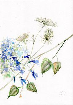 Queen Anne's Lace Flowers WATERCOLOR original Botanical