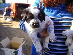 PROTECTORA D'ANIMALS LYDIA ARGILÉS: ABANDONADOS EN LA PUERTA DE UNA TORRE, LLEIDA