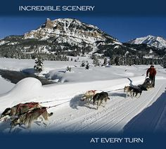 Sled Dog Tours in Jackson Hole - Inditarod Sled Dog Tours www.jhsleddog.com Local 307.733.7388 Toll Free 1.800.554.7388