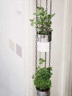 Upcycle tin cans into hanging planters that look good even in the smallest of spaces.