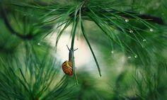 The tiny world of snails 01