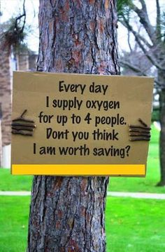 Save the trees- We know that the whole creation has been groaning as in the pains of childbirth right up to the present time. Romans 8: 22. We're all suffering; humans, animals, trees, waters, air. Save us all, God!