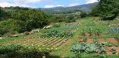 Green Master Project: Como tener una economia saneada y estable