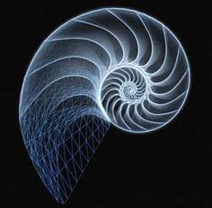 Αποτέλεσμα εικόνας για fibonacci spiral