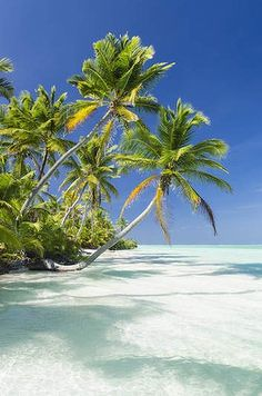 Cocos Islands, Costa Rica ~ untouched by civilization, great scuba diving/snorkeling