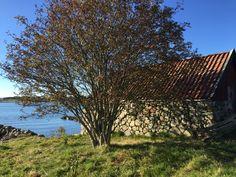 Høsttur i Stavanger