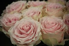 Remembrance - Standard Rose - Roses - Flowers by category | Sierra Flower Finder