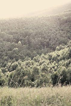 woods, magoebaskloof
