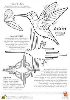 Coloriage oiseau legende colibri sur Hugolescargot.com - Hugolescargot.com