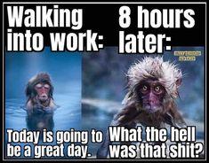 Funny Cartoons, Funny Jokes, Hilarious, Funny Humor Quotes, Work Humor Quotes, Funny Work Humor, Funny Quotes About Work, Back To Work Quotes, Funny Sarcasm
