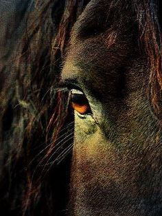 In the Steady gaze of the horse shines a silent eloquence of peace that speaks of love and loyalty, strength and courage. It is the window that reveals to us how willing is his spirit, how generous his heart.