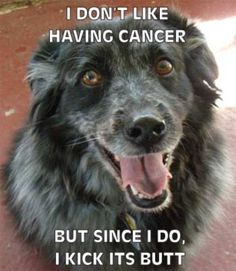Give Cancer the Paw - slimdoggy.com