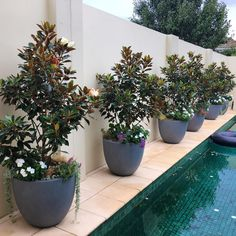 """64 Likes, 6 Comments - Landscaping company (@perennial_landscaping) on Instagram: """"Our poolside planters thriving ☀️#poolscape #poolarea #landscape_capture #landscapingmelbourne…"""""""