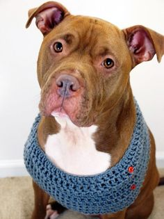 Dog Cowl Crochet Grey with Orange Buttons by courtanai on Etsy, $28.00