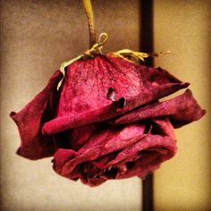 How to dry flowers. DIY decorations ~ dried flowers | lace & lacquer